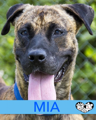 MIA - Dog of the week