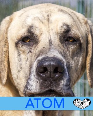 ATOM - Dog of the week